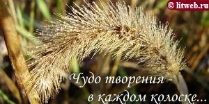 Чудо творения — в каждом колоске... (© litweb.ru)